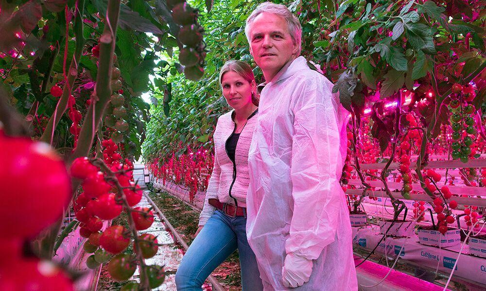 Het onderzoek naar de belichte tomatenteelt met uitsluitend LED's heeft dit jaar een duurzamer karakter gekregen. Een jaar van meten en wegen.