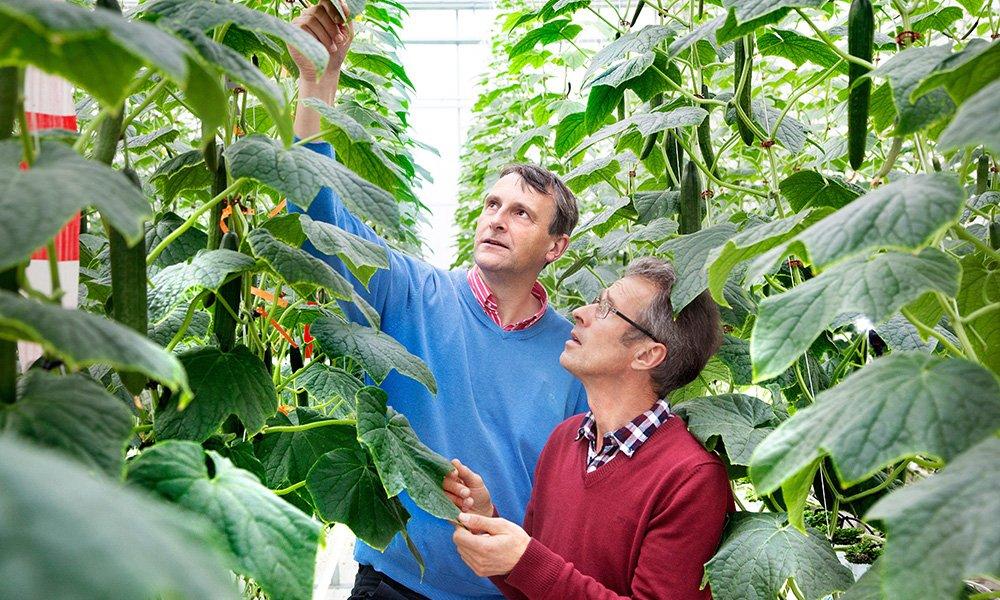 Gedurende twee teelten monitorden onderzoekers intensief lichtonderschepping, teelt (gewas, productie en kwaliteit) en het energieverbruik.