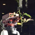 De vernieuwde stek-robot van ISO Group voert drie handelingen tegelijk uit