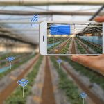 smart farming in kas