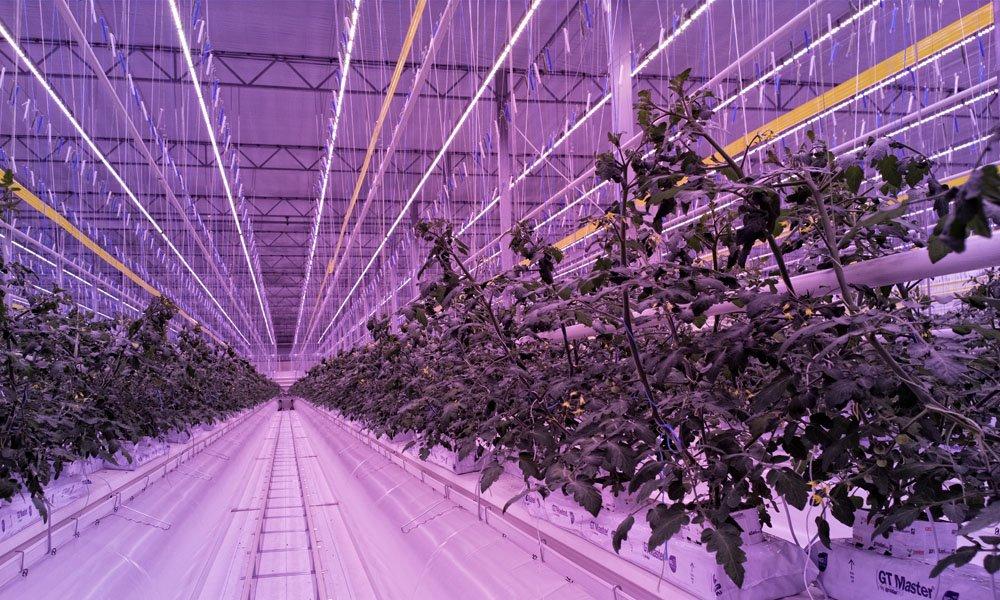 Certhon bouwt voor Franse tomatentelers ultra moderne SuprimAir kas met LED topbelichting.