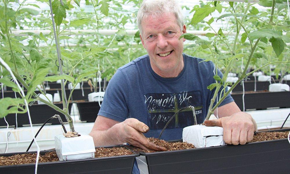 Tomatenteler Kees Stijger heeft dit jaar op proef een kraanvak met trostomaten op een organisch substraat. Hij verwacht een goede productie.