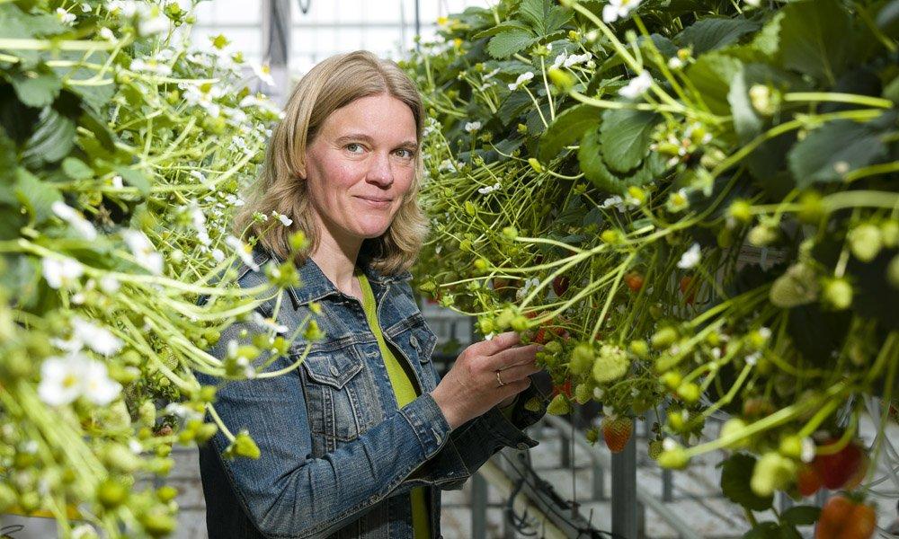 Onderzoeker Jantineke Hofland-Zijlstra heeft het initiatief genomen om te komen tot bundeling van kennis over plantweerbaarheid.