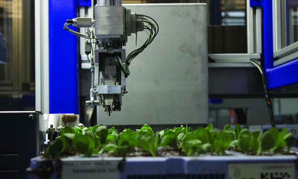 De ISO Cutting Planter 2500, een gerobotiseerde steksteker van ISO Group, haalt steksteeksnelheden van meer dan 2.500 stekjes per uur..