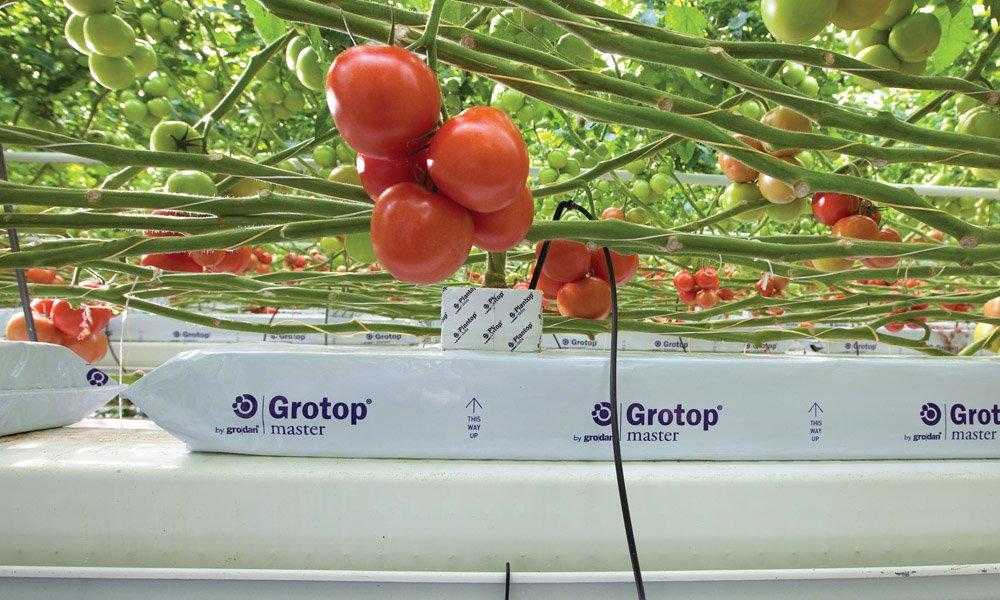 Groeimedia van Grodan voldoet aan de hogere normen die het EU Ecolabel tegenwoordig stelt.