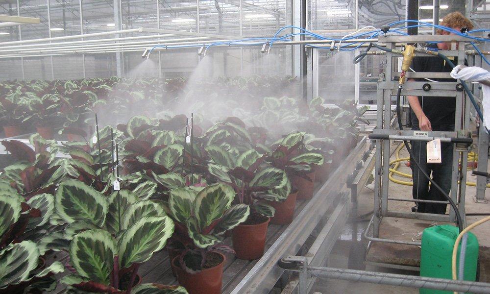 De Nederlandse Voedsel- en Warenautoriteit (NVWA) heeft aangekondigd dit voorjaar te gaan controleren of telers zich houden aan de regel om niet te spuiten met imidacloprid. Niet alleen controleren ze of het middel op het bedrijf aanwezig is, maar ook kunnen ze bladmonsters nemen, die in het lab worden onderzocht. De boete bij overtredingen kan tot € 1.500 oplopen.