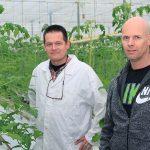 Diverse vruchtgroentetelers experimenteren op kleine schaal met het telen op veen met gunstige micro-organismen.