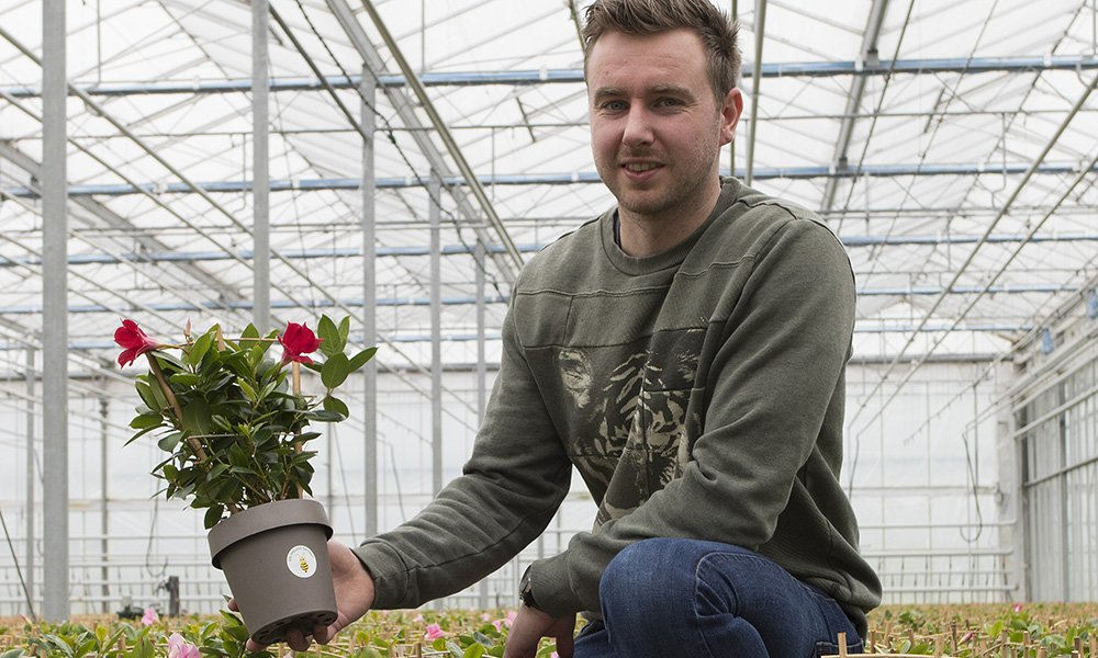 Beauty Plants uit Maasland gaat vanaf april het label 'Bee Friendly Grown' voeren