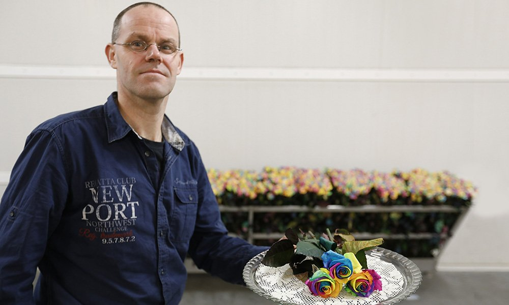 De regenboogroos van Happy Colors uit Delwijnen is in het buitenland niet aan te slepen, vertelt directeur Dirk Bakker.