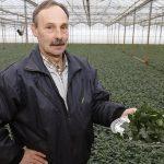 Van januari tot en met maart wordt de selderij op 2.000 m2 onder glas geteelde product opgebost en via The Greenery afgezet op de versmarkt.