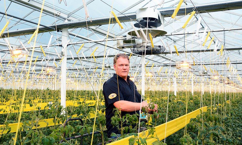 Fresh Valley gebruikt een combinatie van twee verticale ventilatoren. Ze zorgen voor een beter kasklimaat en voor energiebesparing.