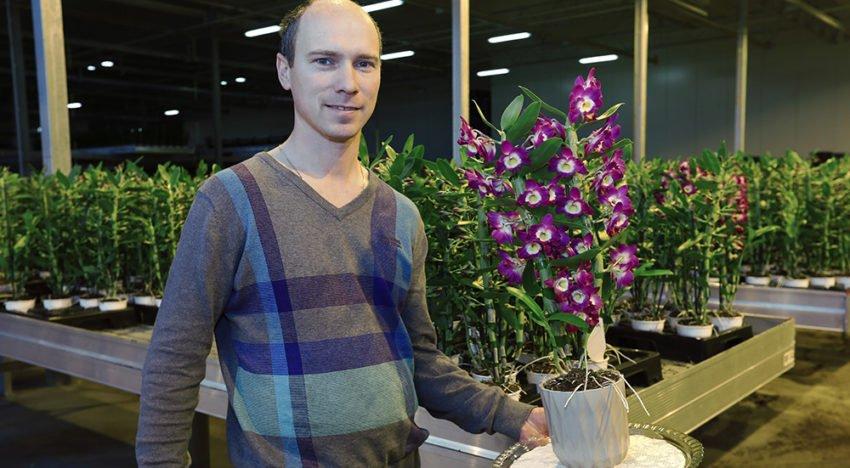 Marco de Hoog met Dendrobium