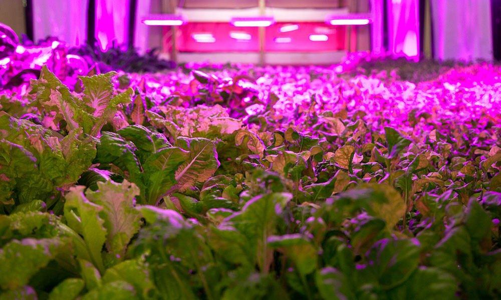 Wat betekent de toenemende trend van vertical farming voor Nederland als exportland in de tuinbouw?