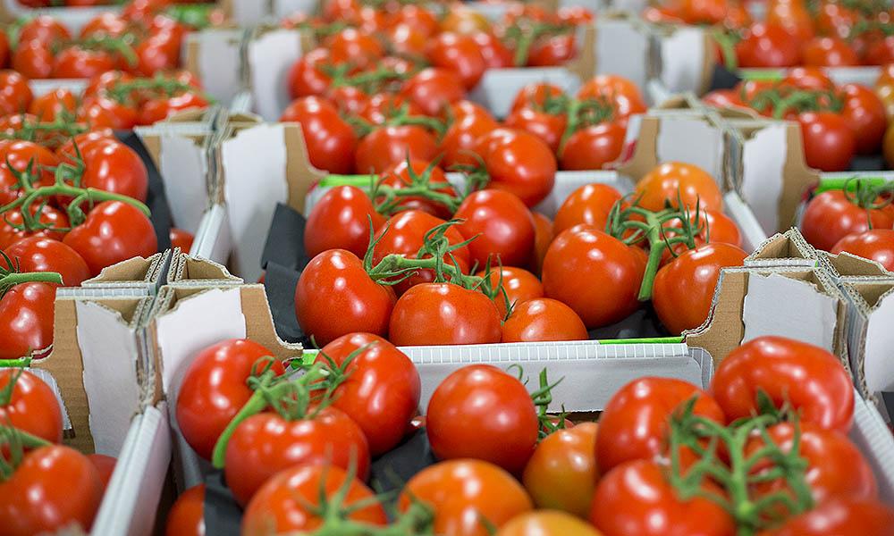 tomaten uit Nederland