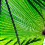 Kan fotosynthese 2.0 de wereld redden?