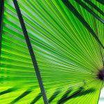 licht valt op palmblad