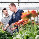 In zijn zoektocht naar een weerbaarder gewas, verdiept gerberateler Ruud Batist zich in de ecologische teeltwijze. Hij integreert natuurprincipes in zijn bedrijf en hoopt daarmee onder meer de biodiversiteit en vitaliteit te verhogen.