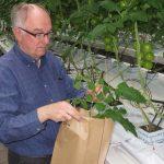 Plantsapanalyse wint aan populariteit. Maar er zijn nogal wat zwakke schakels. De achilleshiel zijn goede normen/streefwaarden.