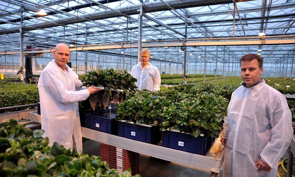 Kalanchoëveredelaar Stefan Slijkerman uit Heerhugowaard is eind vorig jaar een proef gestart om een betere voorraadbemesting voor zijn planten te realiseren.