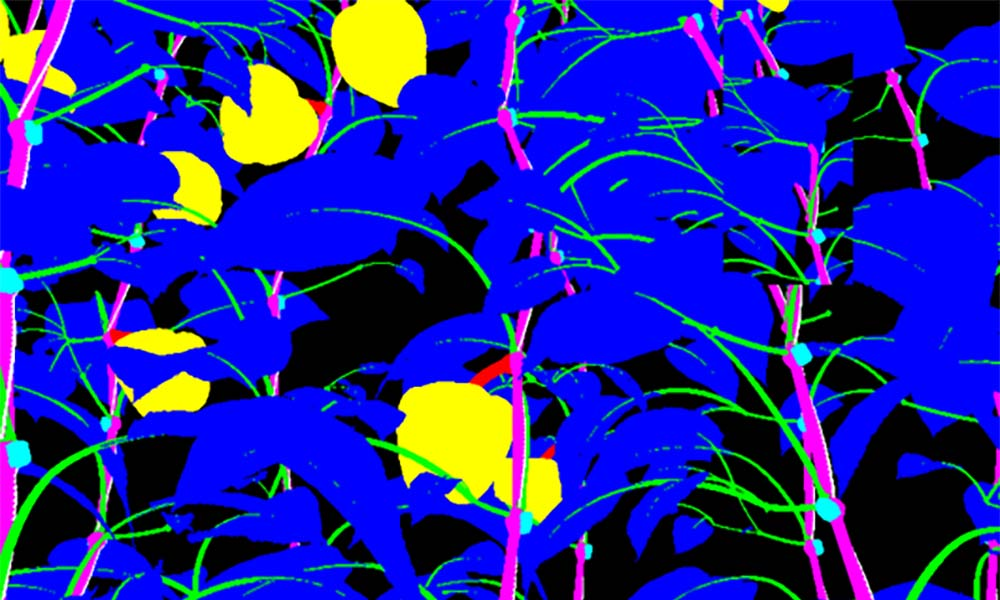 Beeldherkenning bij planten, waarbij individuele plantendelen geïdentificeerd worden