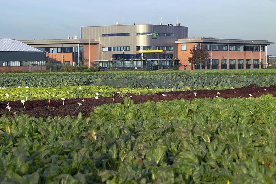 Nieuwe R&D-locatie van Rijk Zwaan in Fijnaart geopend