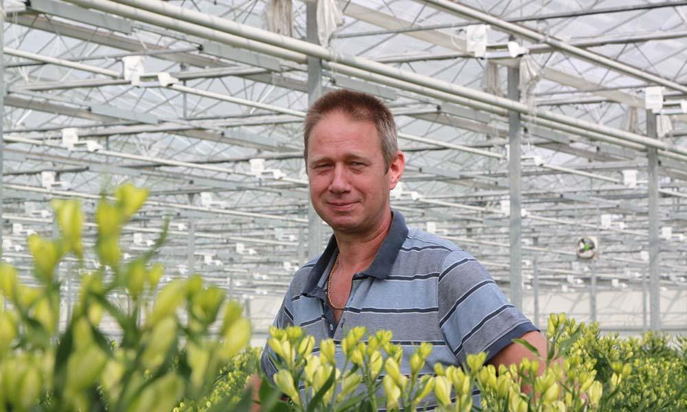 Hoogenboom Alstroemeria breidde de groeilichtinstallatie uit. Tussen de rijen met regelbare SON-T lampen werd in één afdeling LED-verlichting geïnstalleerd