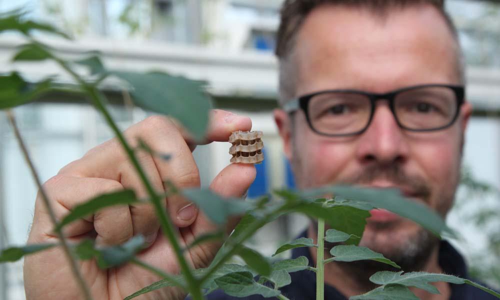 Vier innovatiepartners werken samen aan het ontwikkelen van nieuwe organische teeltconcepten. Zij zetten afgelopen najaar een substraatloze, organische tomatenteelt op