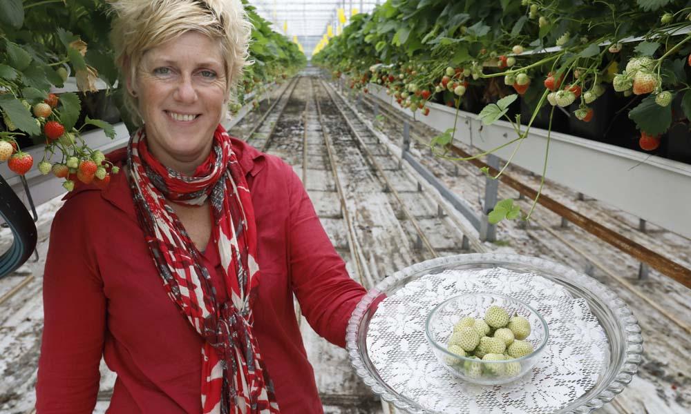 Voor de zelf vermarkte 'lekkerste aardbeien van Nederland' komen de klanten zelfs uit Scandinavië.