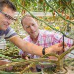 Vaker kleinere hoeveelheden doseren zou het wortelmilieu verbeteren, de omloopsnelheid water en meststoffen verhogen en de kans op verstoppingen verkleinen.