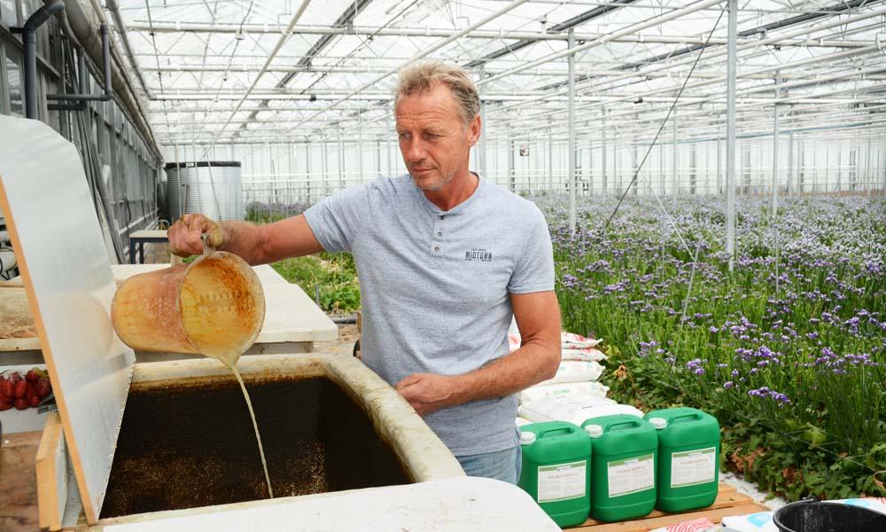 Sinds anjerteler Louis van der Hoorn twee plantversterkers gebruikt, kan hij de tripsproblemen weer overzien. Er blijft wel een forse chemische inzet nodig