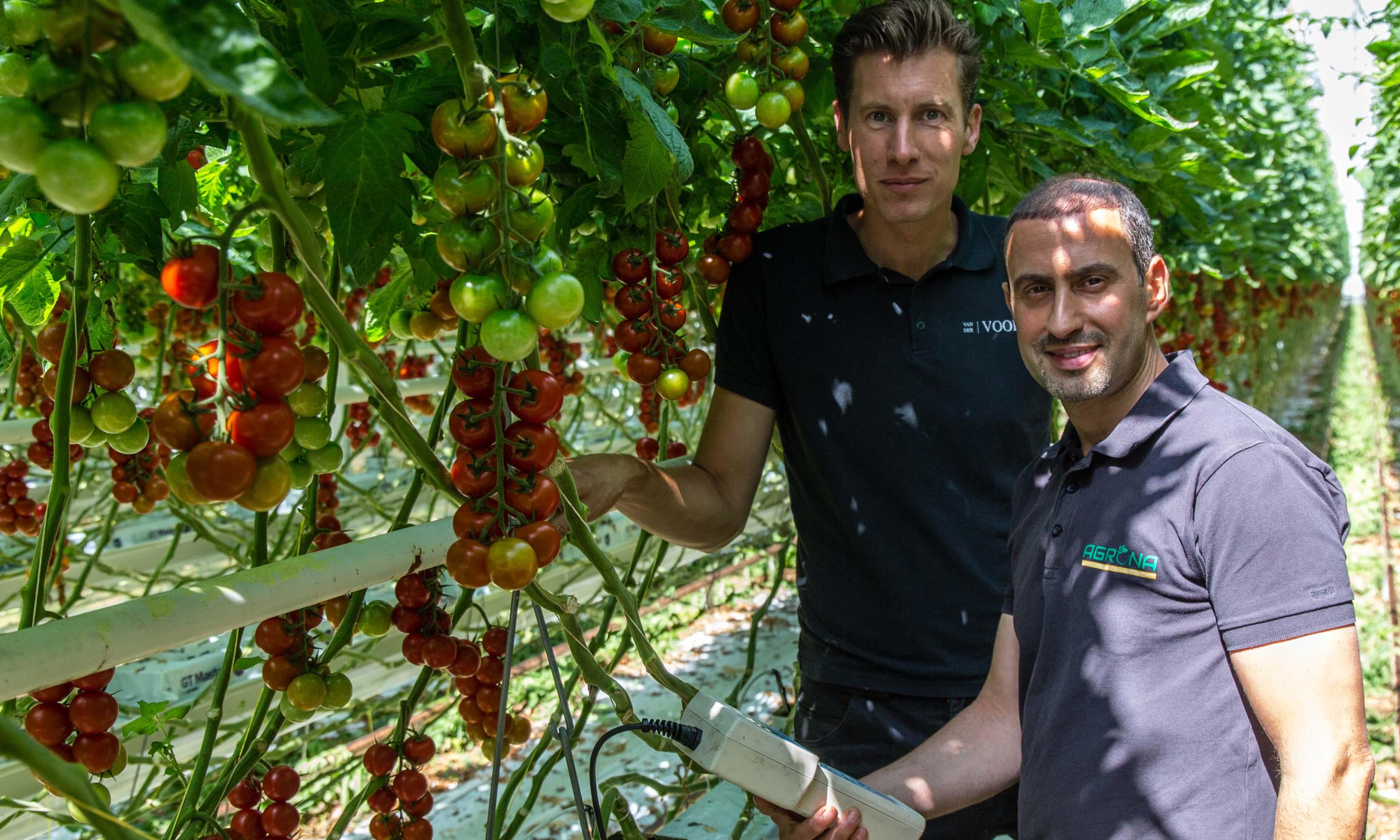 Van der Voort Tomaten in Vierpolders gebruikt een waterbehandelingssysteem dat het zuurstofniveau in de mat permanent optimaal houdt.