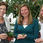 In het kader van de Green Challenge plantweerbaarheid start binnenkort een proef met tomaat, lisianthus en kalanchoë. Doel is om meer inzicht te krijgen