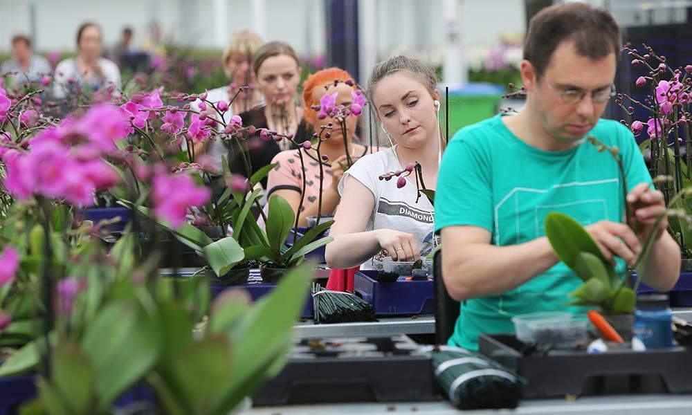 Werknemers bij Orchideeënkweker De Molenhoek