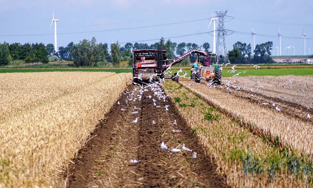 Een boer oogst zijn gewassen op de akker
