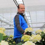 Hydrangeakweker Piet Sonneveld
