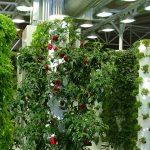 substraatteelt van meerdere gewassen