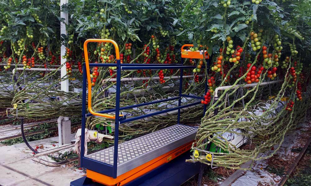 Plantalyzer wordt automatisch telsysteem voor tomaten in de kas