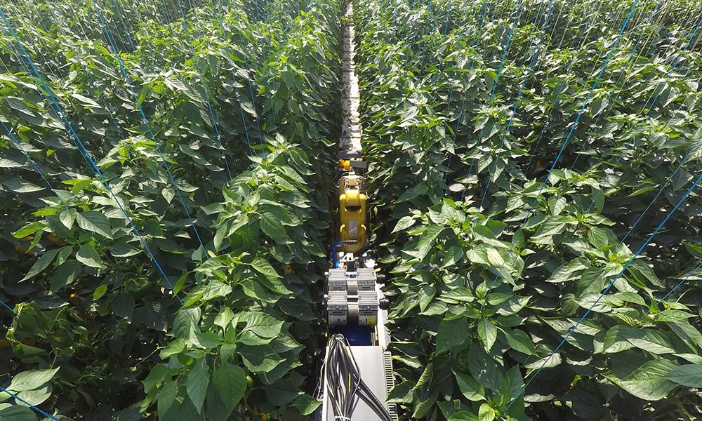 Vier telersverenigingen verdiepen zich in robotisering tuinbouw