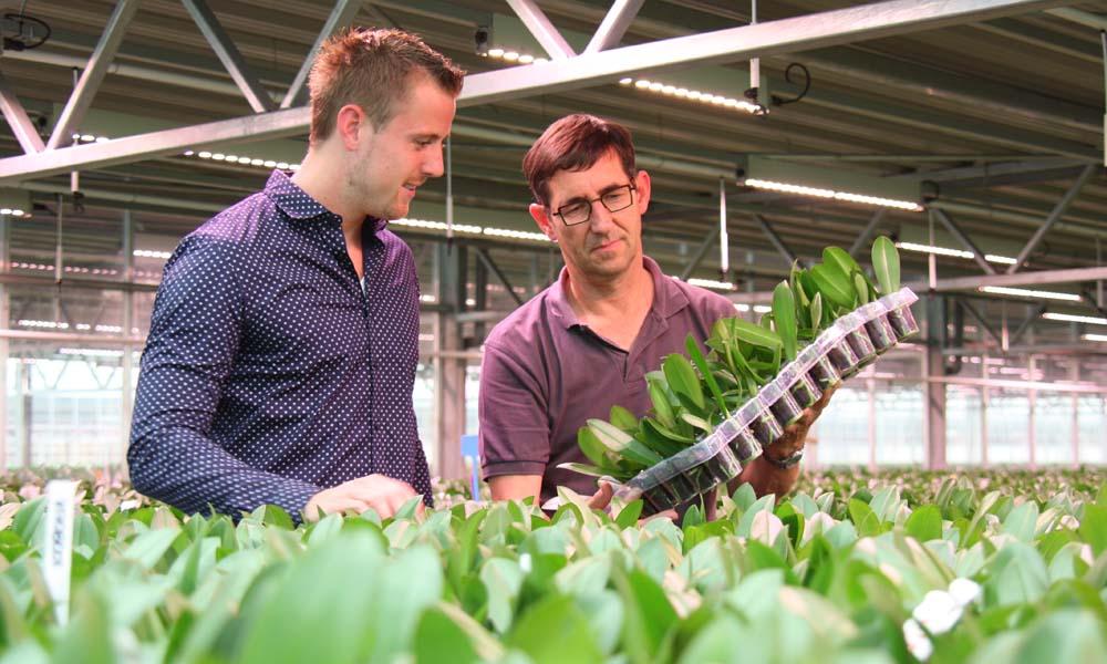 De LED-lampen in de armaturen onder de tweede teeltlaag schijnen helder op de planten in de opkweekafdeling van phalaenopsiskwekerij De Vreede uit Bleiswijk