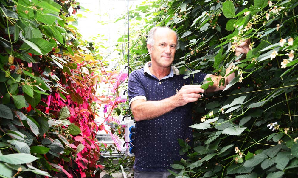 Onderzoekers laten model van ideale plant functioneren in fictieve kas