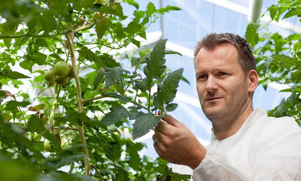 Er zijn diverse onderzoeken naar de tomatengalmijt geïnitieerd. Hieruit bleek dat galmijten op veel meer plekken zitten dan voorheen werd gedacht.