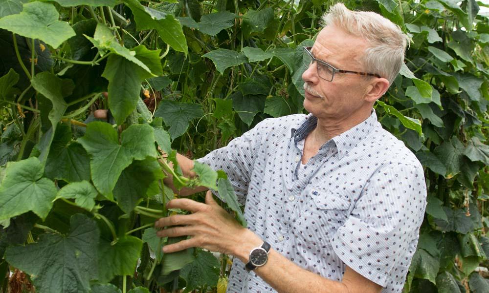 In twee jaar tijd is het de telers in Noordoost-Nederland gelukt om hun bedrijven vrij te krijgen van komkommerbontvirus dankzij een streng hygiëneprotocol.