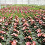 Compacte planten in de kas