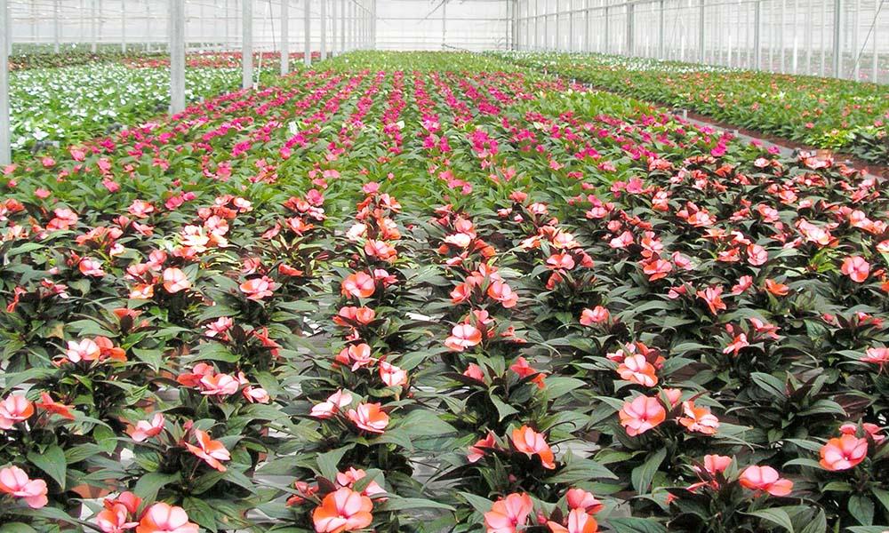 'Biologische klok ook belangrijk voor plantweerbaarheid'