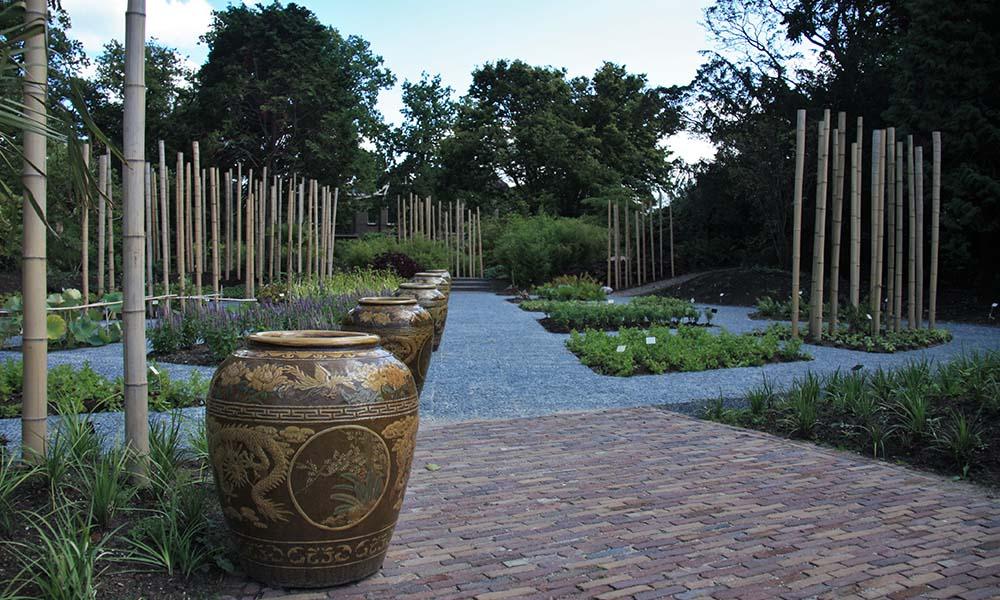 Donderdag 19 oktober organiseert de Hortus van 14.00 tot 15.30 uur een bijzondere rondleiding door de plaatselijke Chinese kruidentuin.