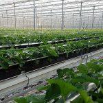 Kas Royal Berry in tuinbouwgebied NEXTgarden