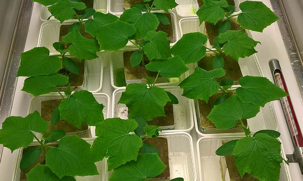 Het aanbod plantversterkers en waterbehandelingen is de laatste jaren sterk toegenomen. Een aantal lijkt in praktijk groei-effecten te geven.