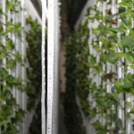 De Leafy Green Machine van binnen