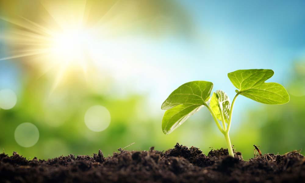 Op weg naar gewassen die groeien als kool, of nog vele malen beter