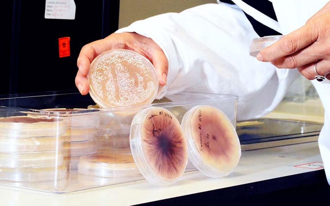 Onderzoek naar betere identificatie, meer zicht op verspreiding en biologische bestrijding